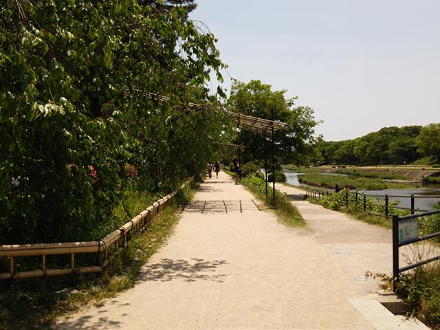 半木の道003