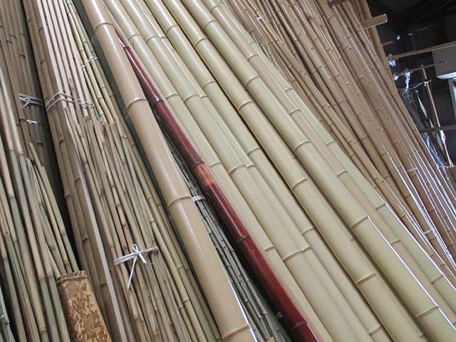 京都の白竹