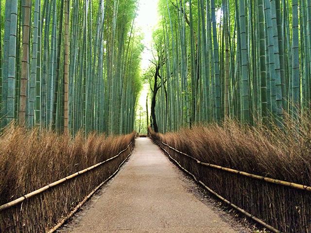 野宮神社-竹林