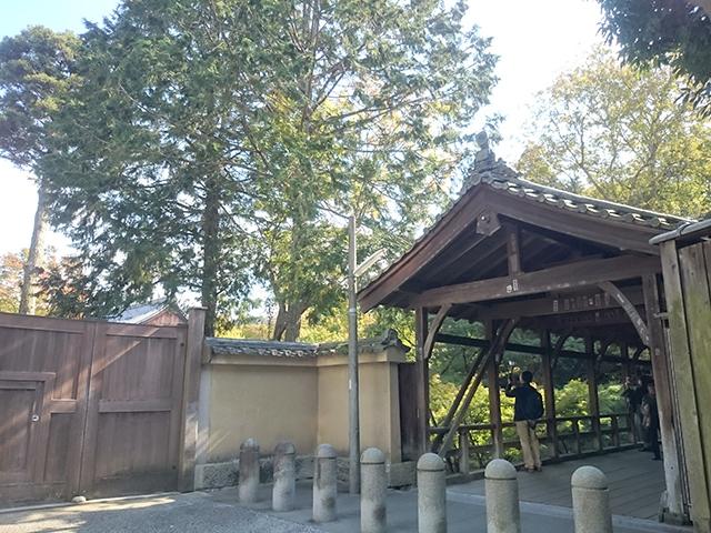 東福寺の紅葉・臥雲橋