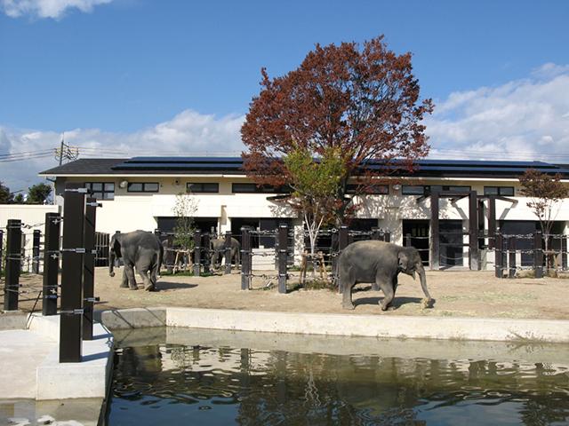 京都市動物園・ゾウ1
