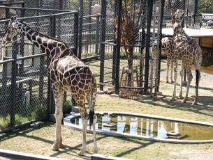 京都市動物園EC
