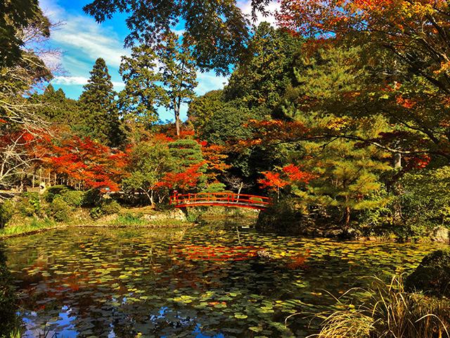 大原野神社・鯉沢池