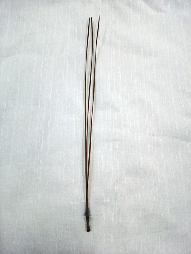 永観堂・三鈷の松