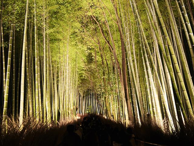 嵐山花灯路2015-04