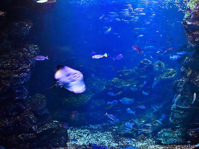 京都水族館 - 大水槽