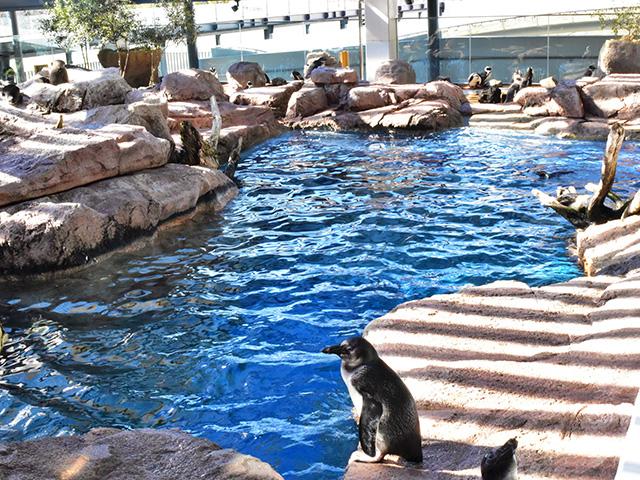 京都水族館 - ペンギンゾーン