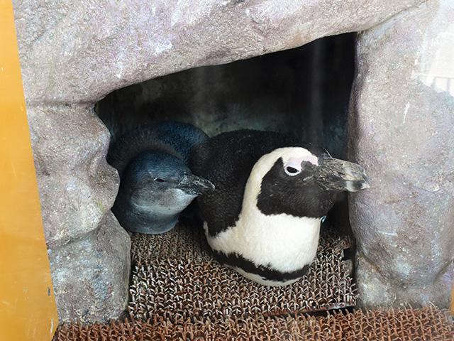 京都水族館 - ペンギン親子