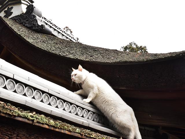 梅宮大社 - 猫2