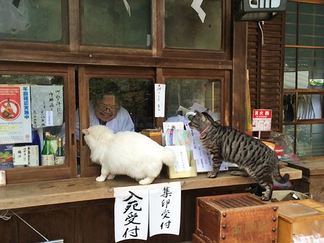 梅宮大社 - 猫4