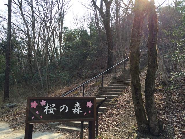 宝が池公園 - 桜の森