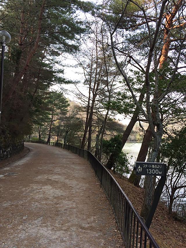 宝が池公園 - 遊歩道