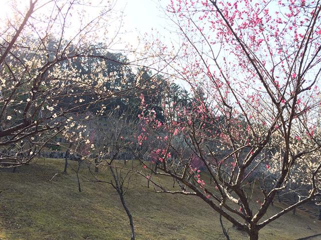 宝が池公園 - 梅林園