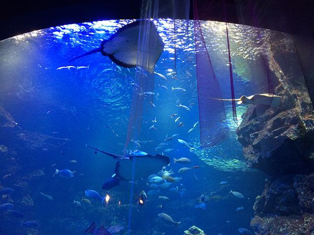 京都水族館 - 大水槽2