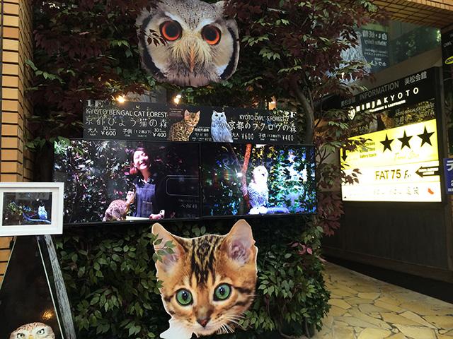 京都ひょう猫の森1