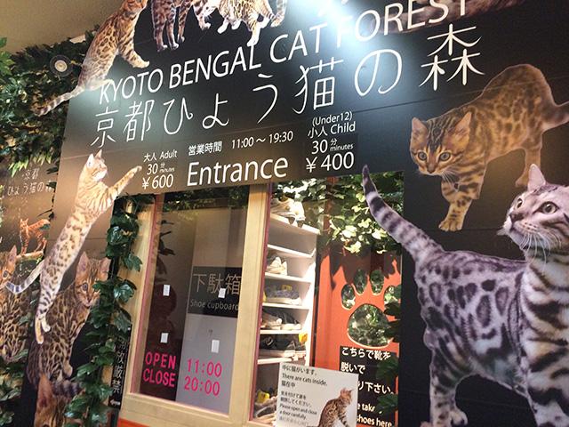 京都ひょう猫の森2