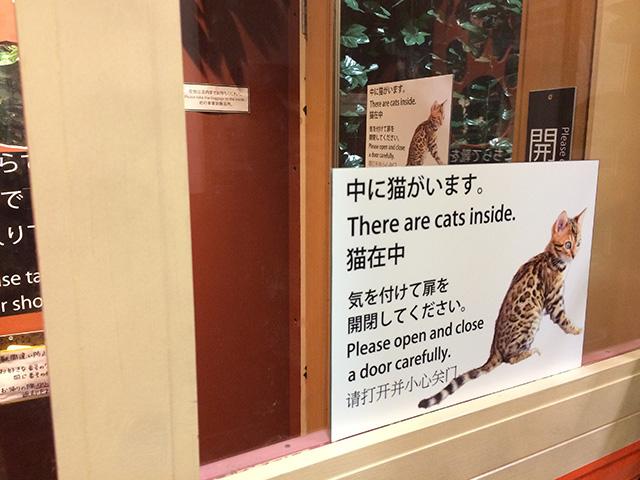京都ひょう猫の森3