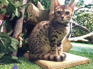 京都ひょう猫の森EC