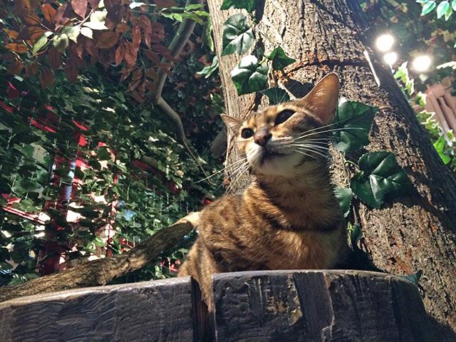 京都ひょう猫の森 - 猫8