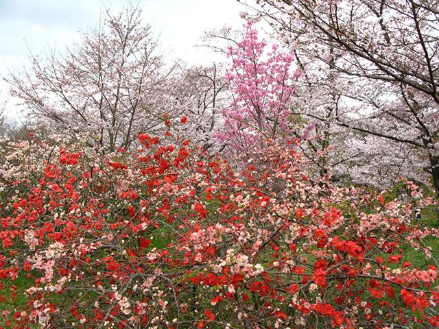 京都府立植物園 - ボケ
