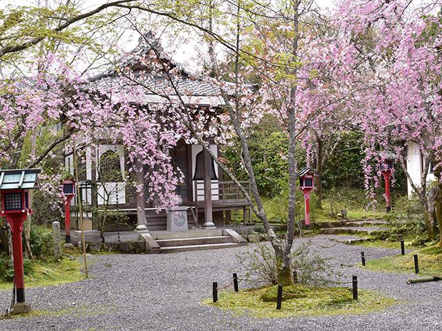 野点席が設けられた鬼子母尊神堂あたりは桜が満開に。花供養の日以外でも、拝観とあわせてお抹茶をいただくことができる。