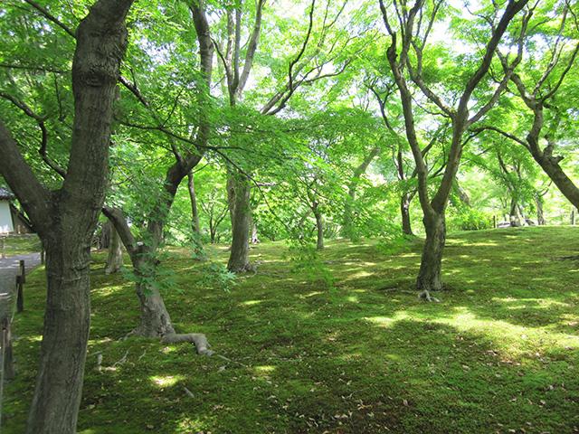 東福寺 - 洗玉澗