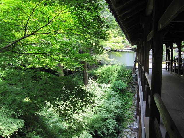 東福寺 - 偃月橋7