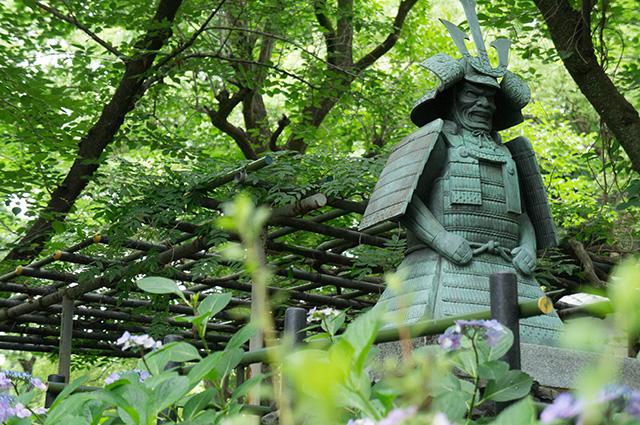 藤森神社 - あじさい苑9