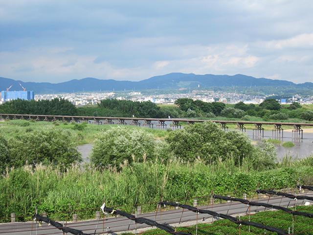 茶畑の向こうの流れ橋