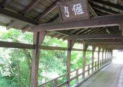 東福寺の青もみじEC