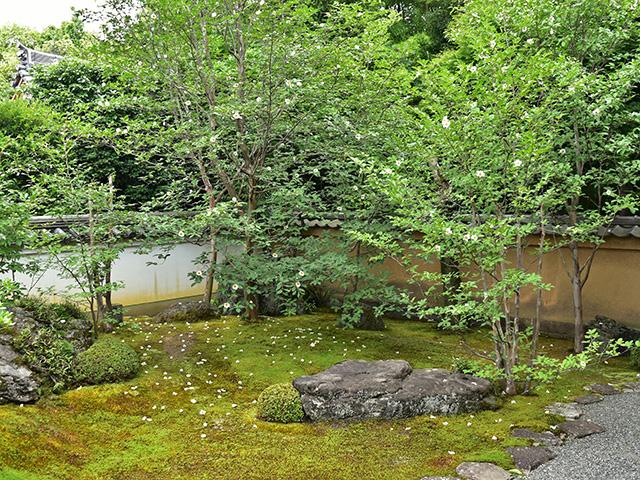 東林院 - 庭園全体