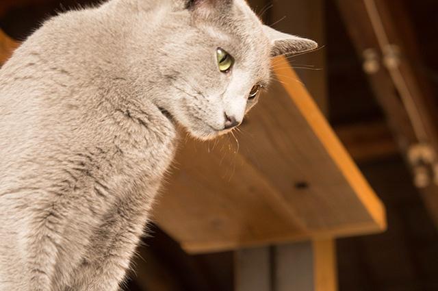 キャットアパートメントコーヒー - 猫1