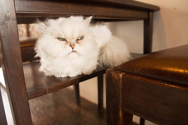 キャットアパートメントコーヒー - 猫2