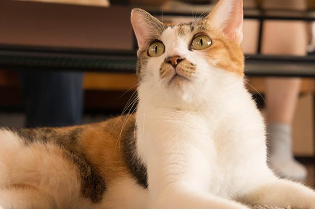 キャットアパートメントコーヒー - 猫3