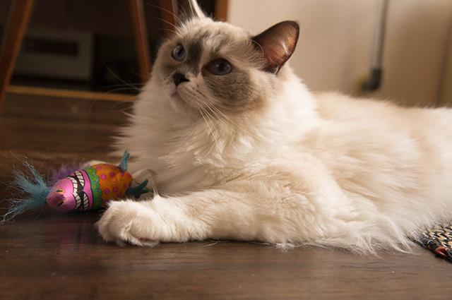 キャットアパートメントコーヒー - 猫4