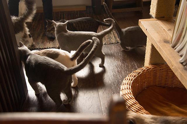 キャットアパートメントコーヒー - カーペット2