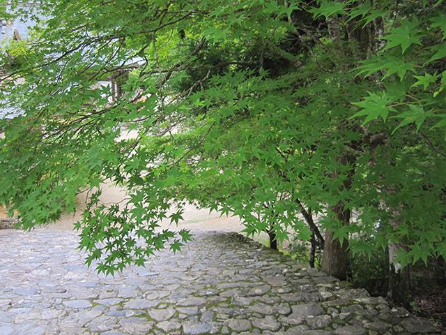 神護寺 - 金堂3