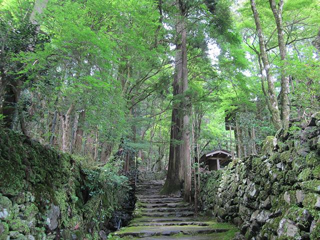 高山寺 - 木立のなかを開山堂へ