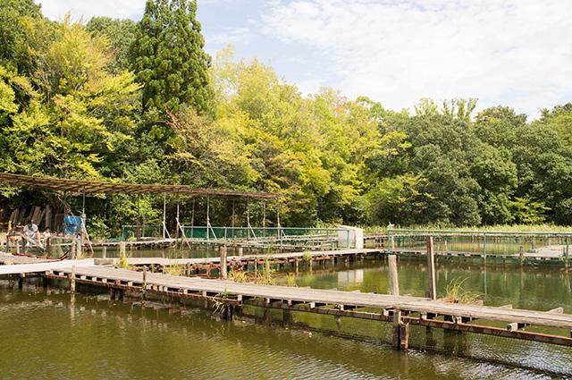 釣り池 弁慶 - 池1