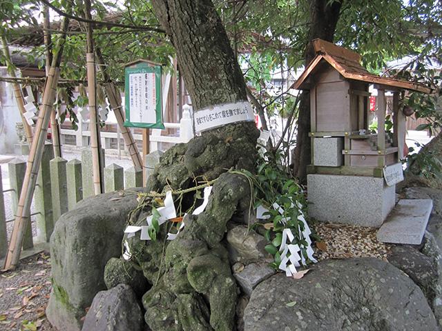薭田野神社 - がん封じ瘤の木