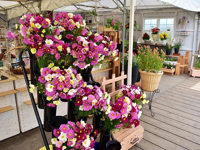 夢コスモス園 - 切り花コーナー