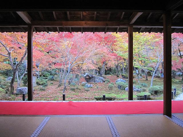 圓光寺 - 書院からの紅葉
