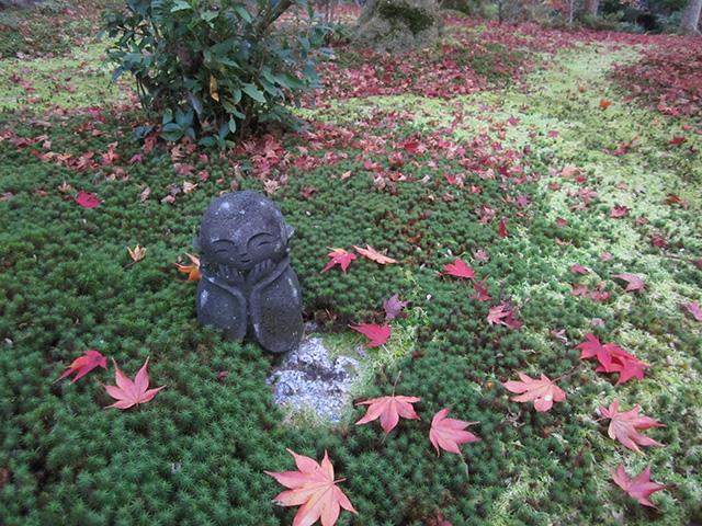 圓光寺 - 敷紅葉