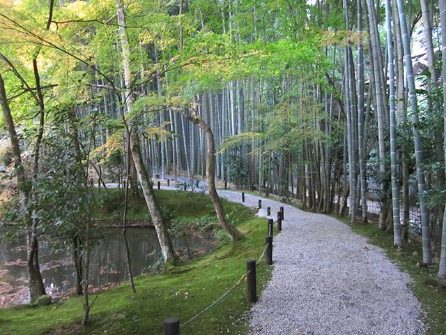 圓光寺 - 竹林