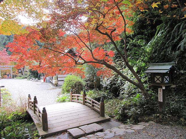 日向大神宮 - 橋と紅葉