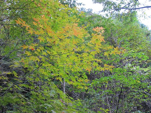 滝又の滝 - 紅葉2