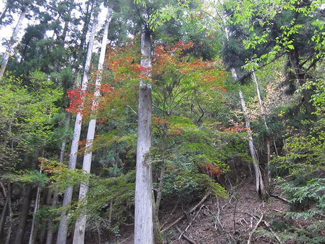 滝又の滝 - 紅葉3