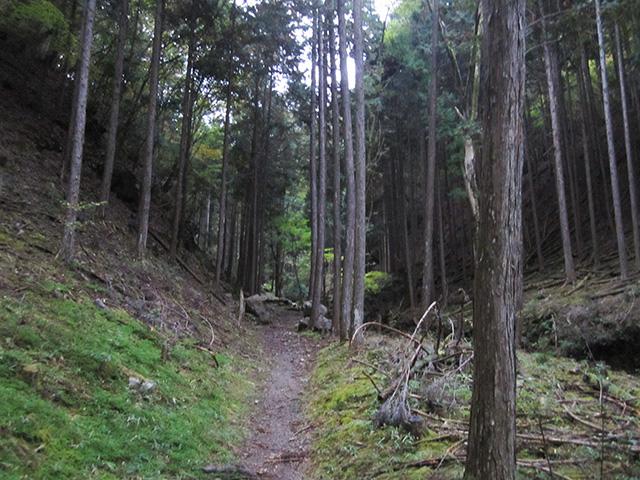 滝又の滝 - 道1