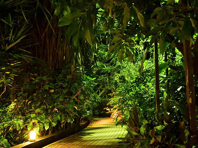 京都府立植物園 - 温室内1
