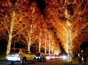 京都のイルミネーション3選EC